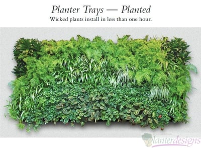 Living Walls-Plant Trays-Modular Plant System