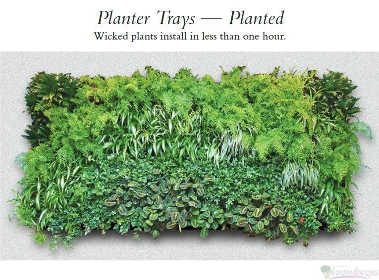 Living Wall Planters living walls-plant trays-modular plant wall system